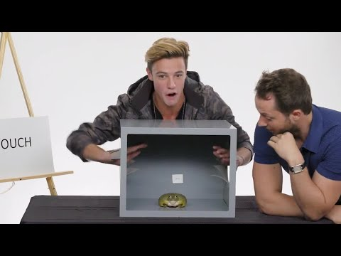 Cameron Dallas Touches a Frog, a Dead Octopus & Other Weird Stuff | Vanity Fair