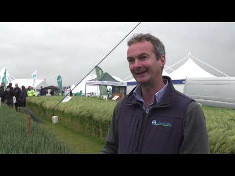 Glenside at Cereals 2019
