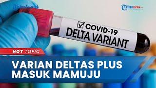 Covid 19 Varian Delta Plus Sudah Masuk ke Mamuju, Dinas Kesehatan Sulawesi Barat Sebut Tak Tahu
