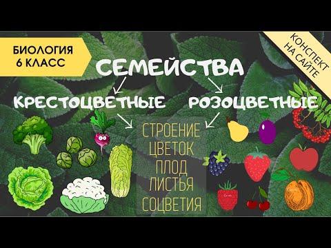 Семейство Крестоцветные и Розоцветные. Растения. Биология 6 класс. Плод, листья, формулы цветков