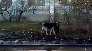 Даа собаки Краснодар