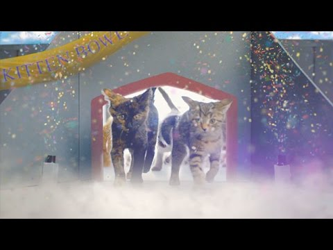 Hallmark Channel Commercial for Kitten Bowl III (2016) (Television Commercial)