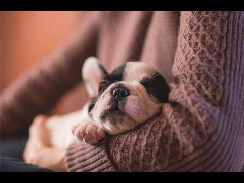 Adopcion de mascotas: muchos estan esperando una oportunidad para amar | Noticias Caracol