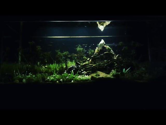 Aquascape Putussibau #032