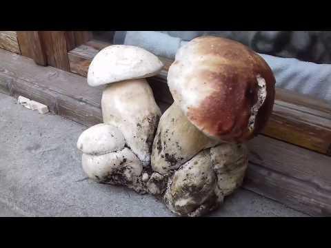 Medicine per trattamento di un fungo su pelle