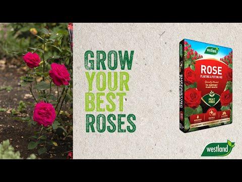 rose planting mix 25l Video