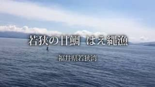 若狭甘鯛漁