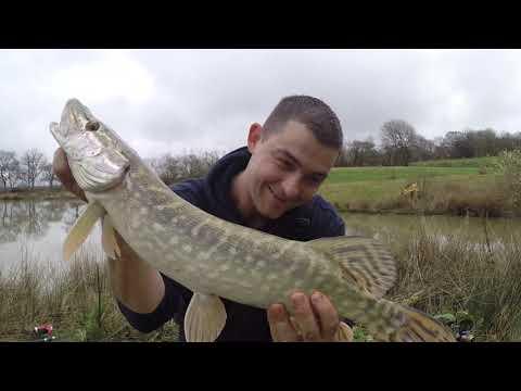 Geddefiskeri med levende agnfisk under flåd