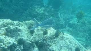 preview picture of video 'New Zealand Reef Fish'