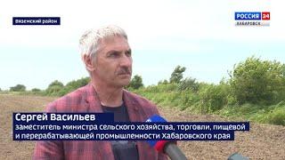 Интервью. Посевные площади под гречиху увеличивают в Хабаровском крае.