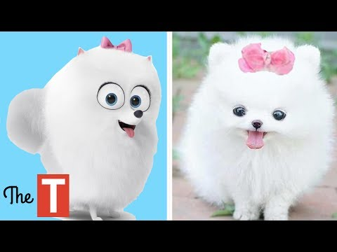 10 Secret Life Of Pets Characters In Real Life