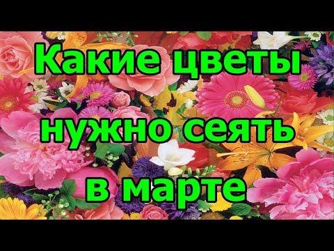🌺Какие #цветы нужно #сеять в марте.