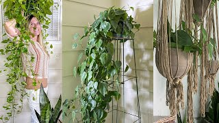 Crazy Plant Stands!   12 Easy Ways To Elevate Your Houseplants