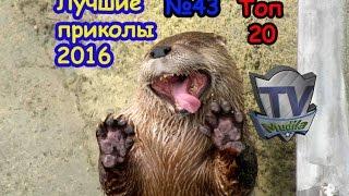 ТОП 20 ЛУЧШИХ ПРИКОЛОВ ОТЛИЧНАЯ сборка сборник ПОДБОРКА 2016 №43