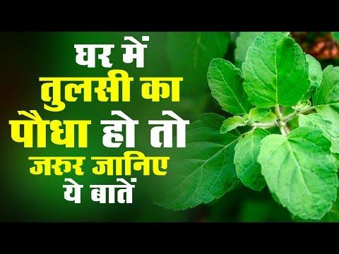 घर में तुलसी का पौधा हो तो जरूर जानिए ये बातें | know these things about Basil tree plant