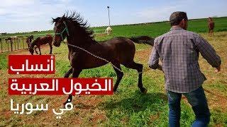 Horse-Syria.jpg