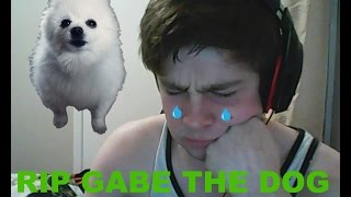 Rip Gabe The Dog (Tribute) You Will Be Remembered