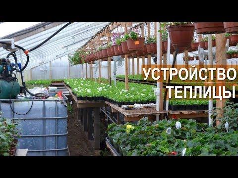 Устройство теплицы для выращивания цветов. Цветочный бизнес Кайгородцевых.