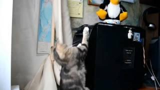 Приколы 2017 Лучшая подборка приколов про котов  FUNNY Cats Compilation