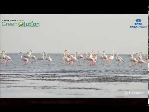 Biodiversity around Coastal Gujarat Power Limited, Mundra