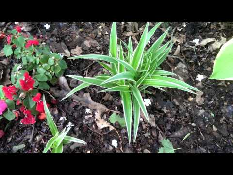 Plants To Grow In Shade Under Trees - Low Maintenance Mp3