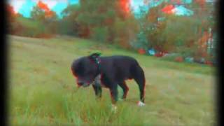 preview picture of video 'OLLiE-the-DOG on BlackHeath 3D anaglyph test FujiFilm W1 video 3Dru Zed'