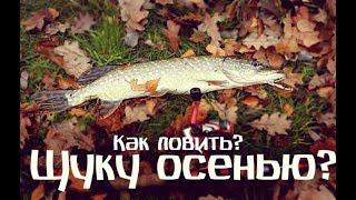 Когда клюет щука осенью