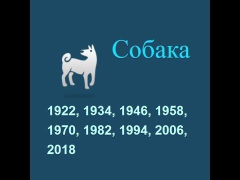 Год собаки, гороскоп составленный психологом Натальей Кучеренко.