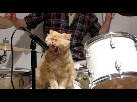 Funny: Cats and Dogs Singing