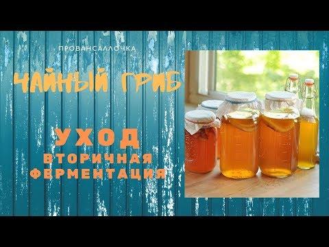 ЧАЙНЫЙ ГРИБ.  Уход и Вторичная ферментация Чайного Напитка КОМБУЧА Kombucha
