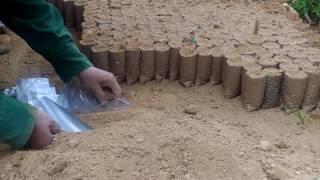 Kỹ thuật điêu luyện vô bầu đất ươm cây giống