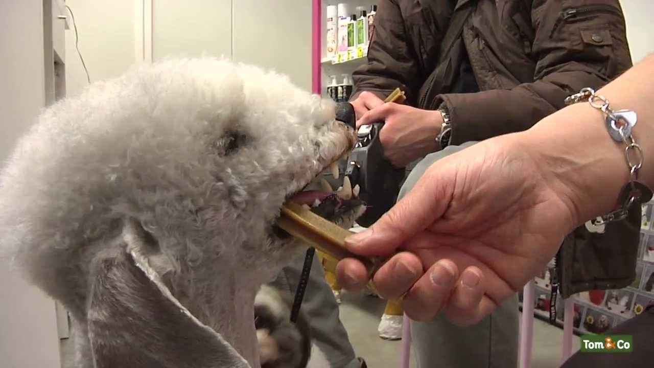 Over verzorging en grooming