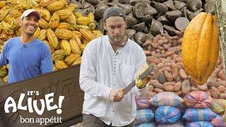 Brad Makes Chocolate in Ecuador: Part 1 | It's Alive | Bon Appétit - dooclip.me