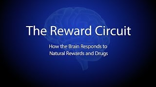 The Reward Circuit: How the Brain Responds to Natural Rewards and Drugs