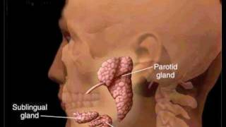parotitis and salivary gland infections