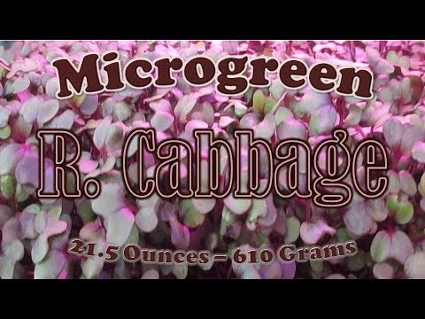 , title : 'How to Grow Red Cabbage Microgreens the IHG Method