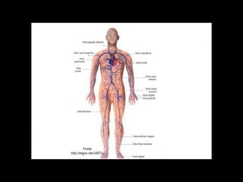 Hipertensão por médicos