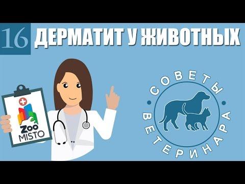 Дерматит у домашних животных | Виды, Лечение и профилактика дерматита у питомцев | Советы Ветеринара