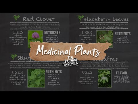 Video Native Medicinal Plants Part 1 (Red Clover, Stinging Nettle, Blackberry Leaves & Sassafras)