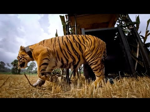 GoPro: Let the Tiger Go
