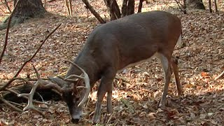 Maximize Mineral Sites for Deer with These Tips