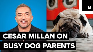 Cesar Millan's advice for working doggy parents