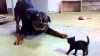 Смотреть онлайн Храбрый котенок
