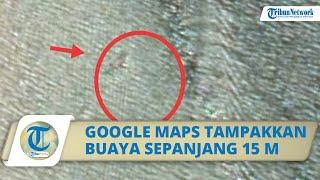 Sebuah Foto Tangkapan Google Maps Tampakkan Seekor Buaya Sepanjang 15 Meter, Hebohkan Warga