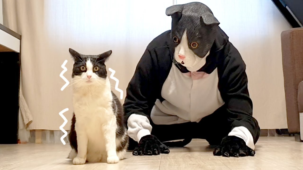 Пранк над котом - большая маска фото