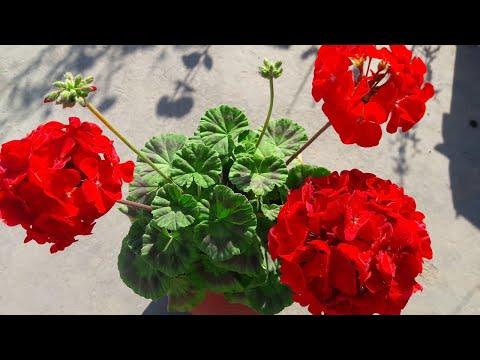 9 причин, по которым каждый должен иметь дома это комнатное растение
