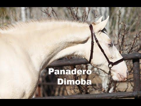 Panadero Dimoba (Publicado 27-1-2018)