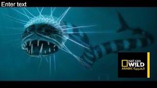 Sea Monsters Octopus Deep Ocean Nat Geo Documentary HD