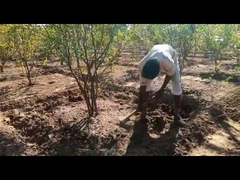 Progressive Farmer from Rajasthan- Rajnish Lambha ( Hardev Baag & Udhyan Nursery) - 3