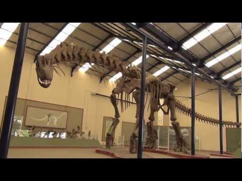 Tino: il dinosauro più grande del mondo